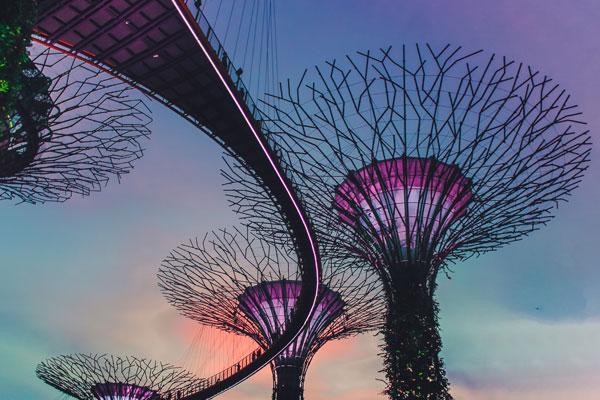 Future trees Illustration